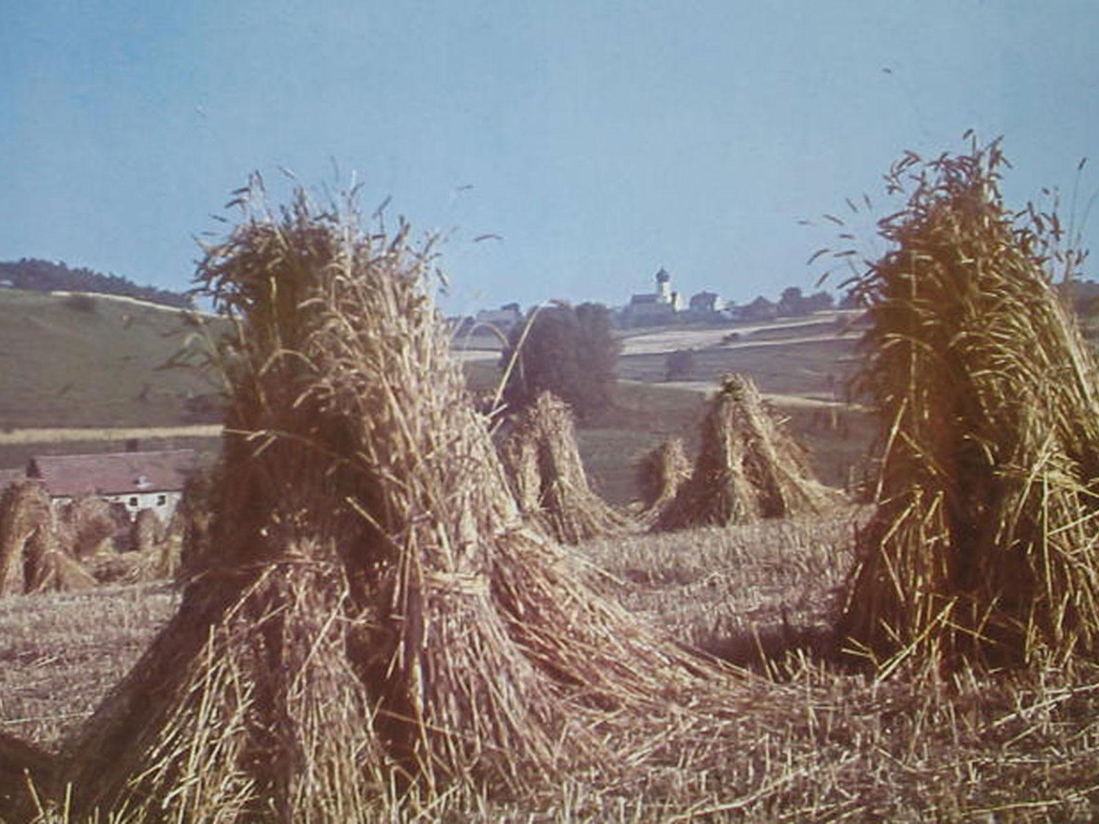 Getreidegarbe